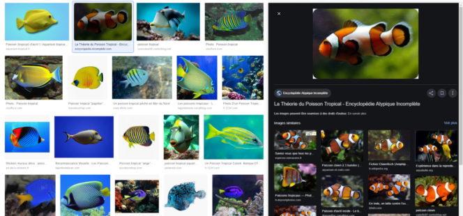 Google Images adopte un nouveau design et de nouvelles fonctionnalités